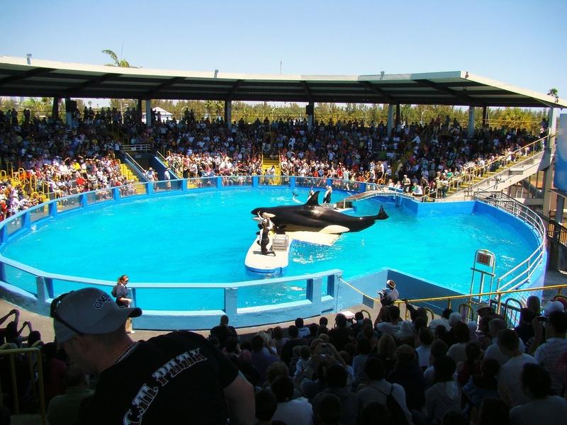 Lolita Killer Whale